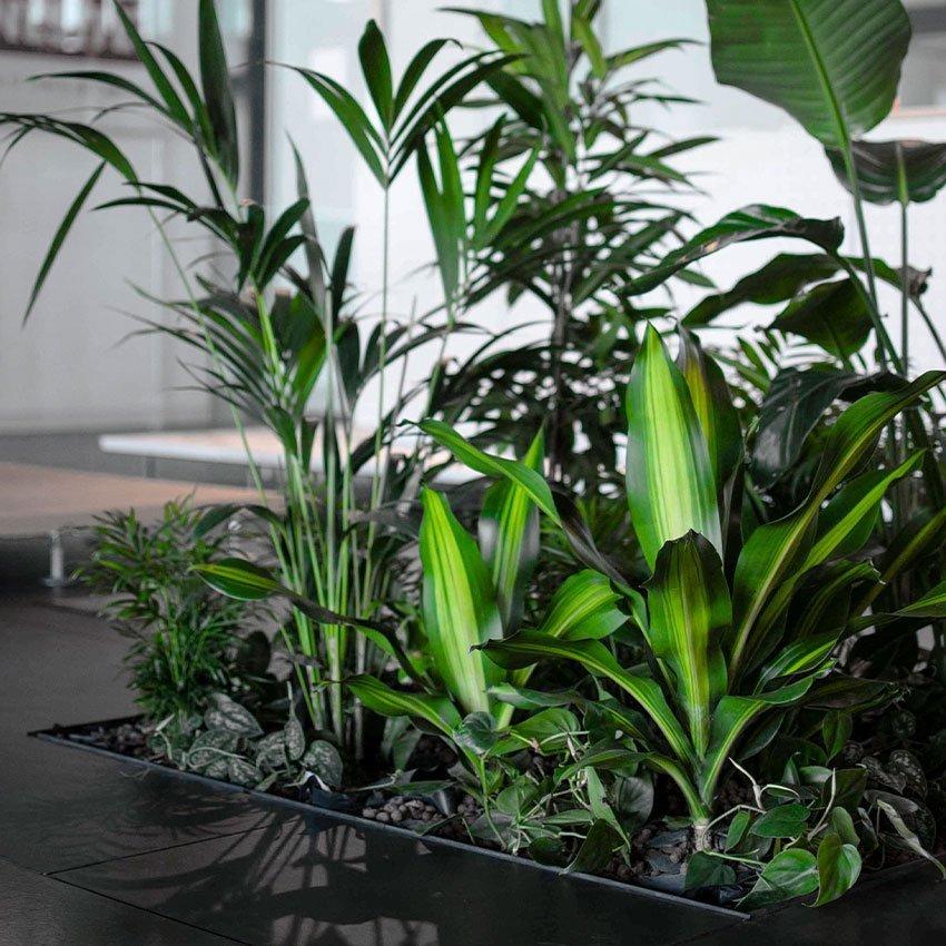 Floora-composizione-piante-a-pavimento-in-indrocoltura