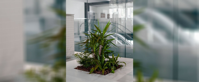 Floora, modulo piante per pavimenti sopraelevati