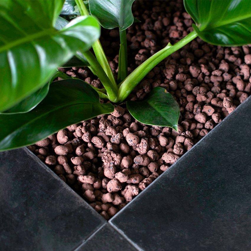 Idrocoltura piante da interno