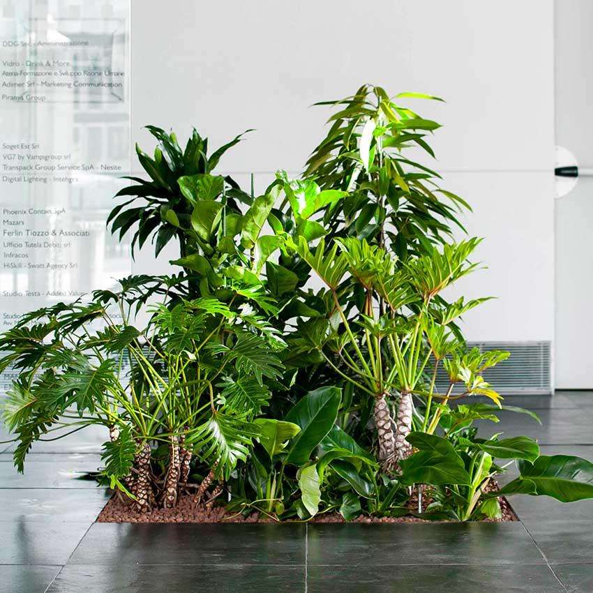 Floora, piante in idrocoltura per uffici